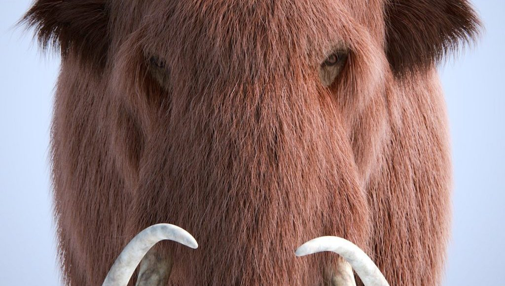 Digitally created wooly mammoth. Full face view towards viewer, showing detail of hair.
